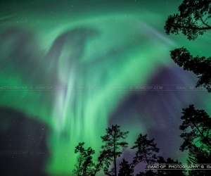 Aurora Borealis or Northern Lights compilation taked from Estonia